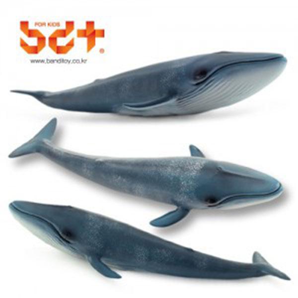 반디 흰수염고래