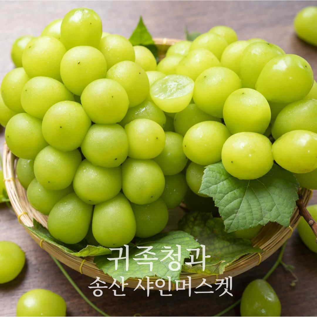 귀족청과 송산 프리미엄 샤인머스켓 4kg 빅사이즈